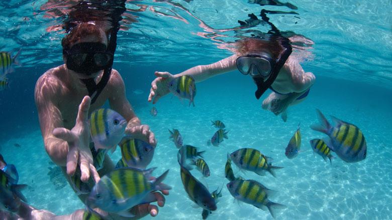 Snorkel - Koh Lipe