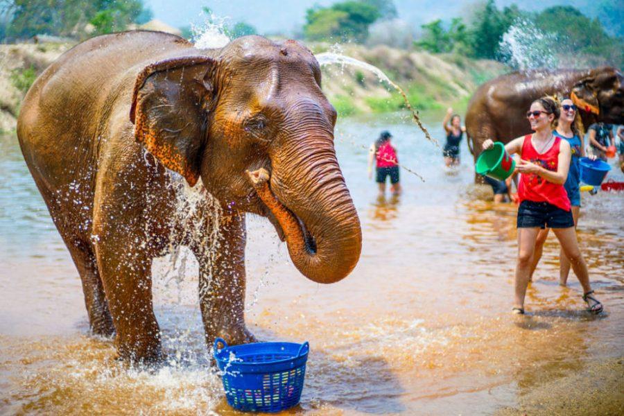 Cultura Animal en Tailandia