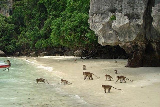 Monkey Beach - Que ver y hacer en Koh Phi Phi