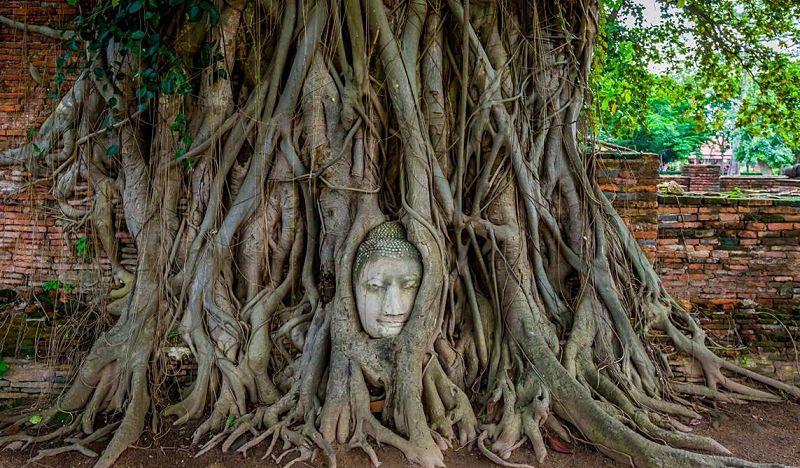 Cara de Buda en raíces - Ayutthaya - Tailandia