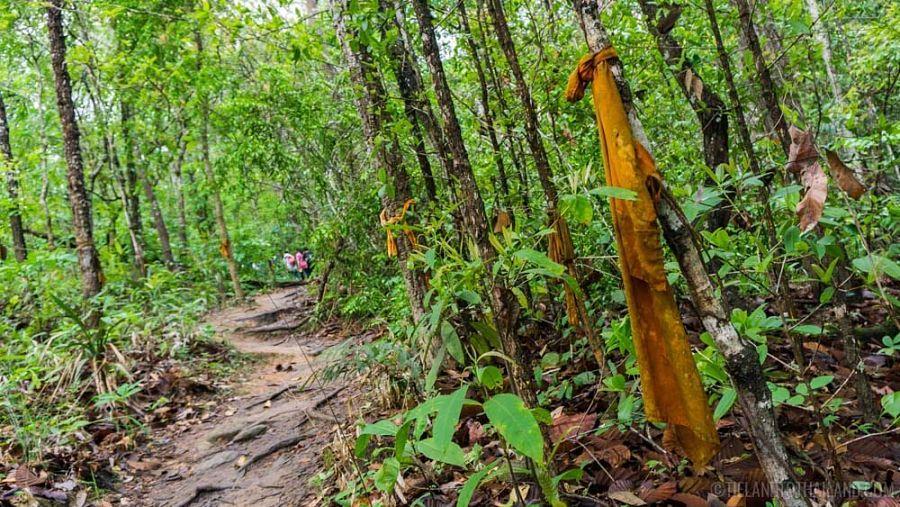 El sendero de los monjes - Chiang Mai
