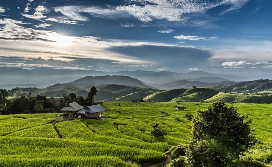 Doi Inthanon - Parque Natural de Chiang Mai - Campos de Arroz