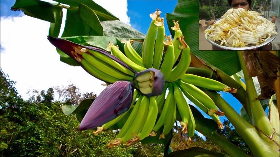 Frutas Tropicales de Tailandia - Flor de Plátano