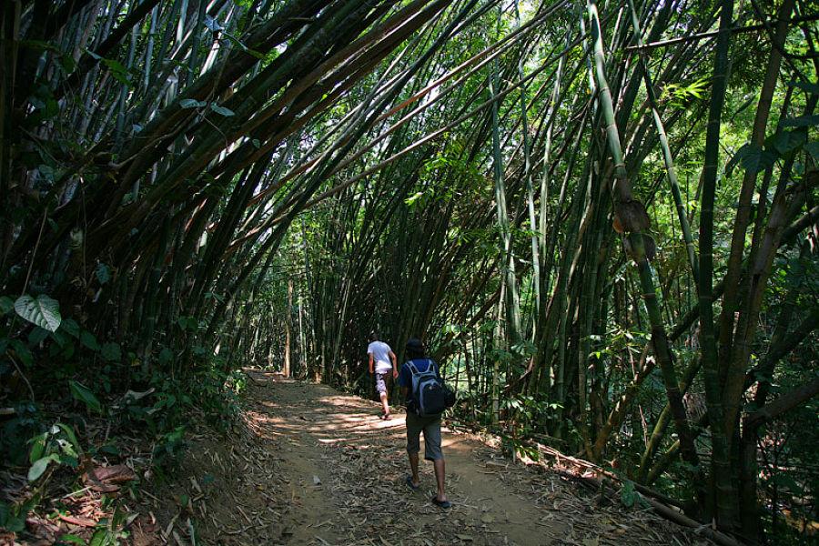 Parque Khun Korn - Camino de Bamboo