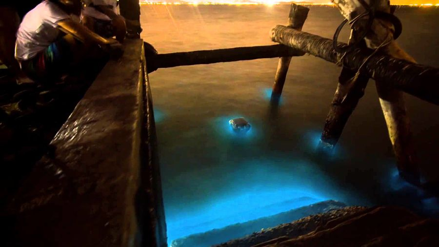Plancton Luminiscente en Tailandia - Muelle