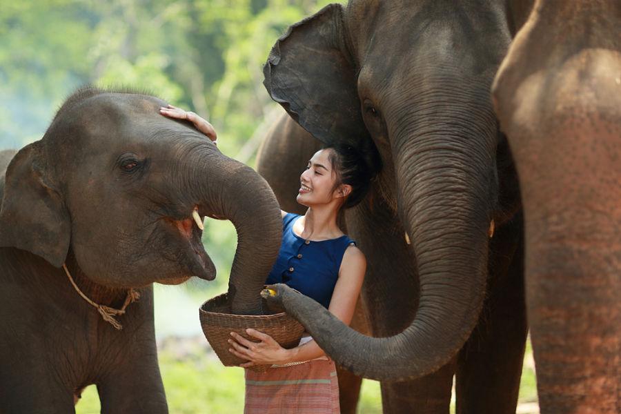 Excursiones en Chiang Mai - Refugio de Elefantes