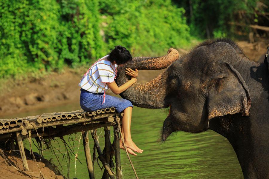 Excursiones en Chiang Mai en Español - Santuario de elefantes