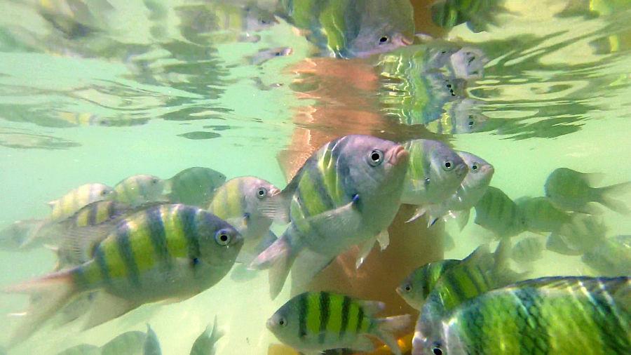 Snorkel en Koh Phi Phi