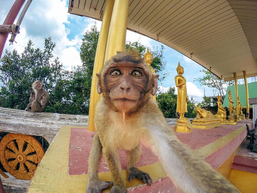 Templo de la Cueva del Tigre - Monos