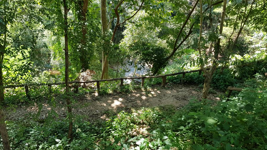 Mae Sa Waterfall - Camino de acceso