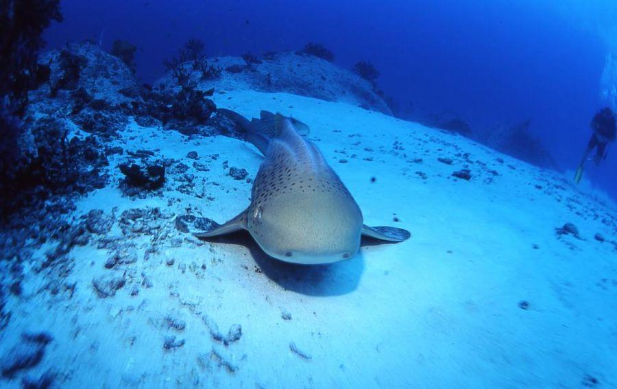 Tiburones en Islas Similan