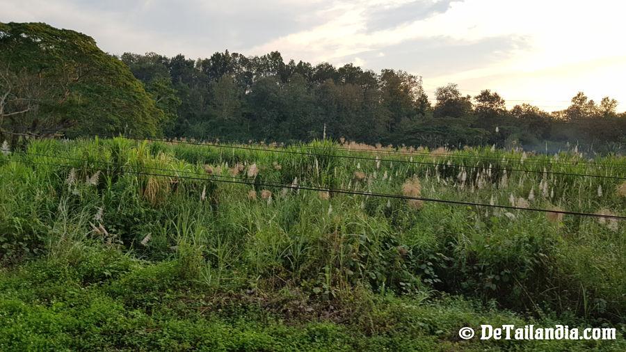 Vistas Viaje Chiang Mai - Lampang en tren